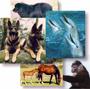 Les animaux, chouchous des élèves