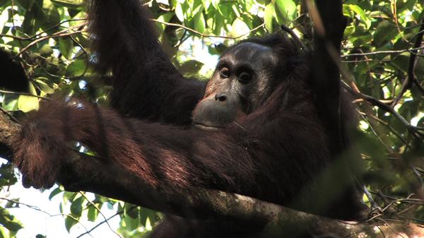«Green» : un documentaire atypique et choc sur la déforestation