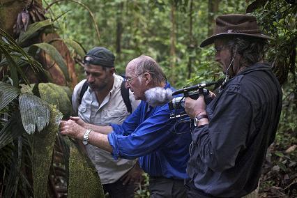 Un film pour sauver les forêts tropicales primaires