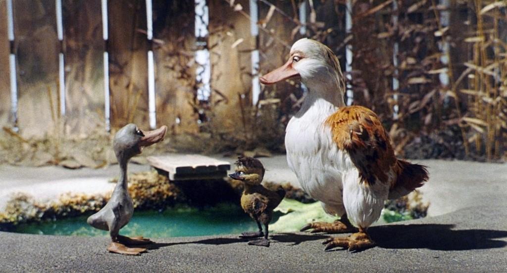 Dossier pédagogique sur le Vilain petit canard