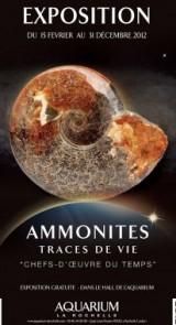 Une expo exceptionnelle sur les ammonites à l'Aquarium La Rochelle