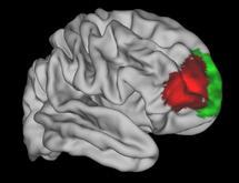 Des chercheurs d'Oxford ont peut-être découvert l'emplacement de la conscience