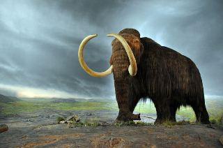 Des fleurs sauvages ont permis aux mammouths laineux de survivre pendant l'ère glaciaire