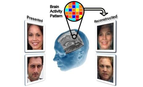 Un scanner cérébral peut reconstituer les visages des personnes auxquelles vous pensez