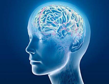 Au-delà de 24 ans, la vitesse du cerveau ralentit