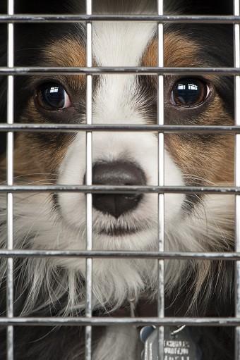 Des animaux en refuge adoptés grâce aux lettres d'écoliers