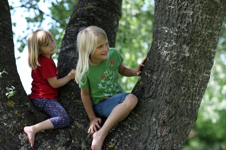 Les espaces verts dans les cours de récréation réduisent le stress et l'inattention