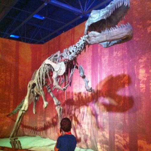 Exposition pédagogique : à la rencontre des dinosaures et des animaux de la Préhistoire