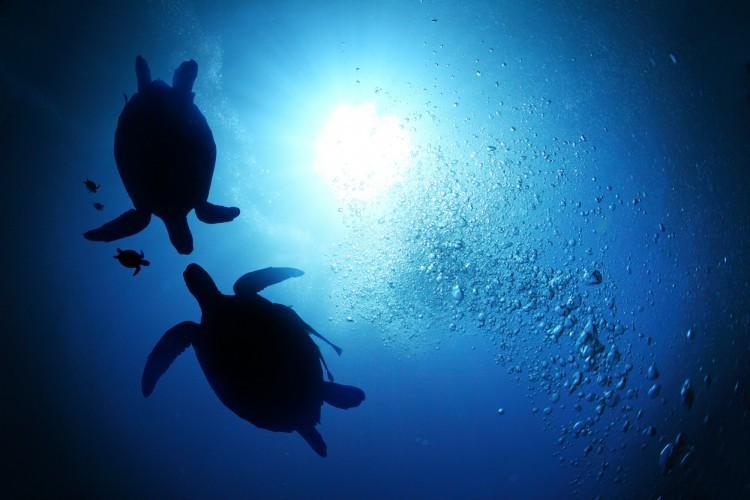 Biodiversité : le nombre de populations animales divisé par deux en 40 ans