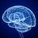 Prix Nobel de médecine 2014 : les neurosciences récompensées