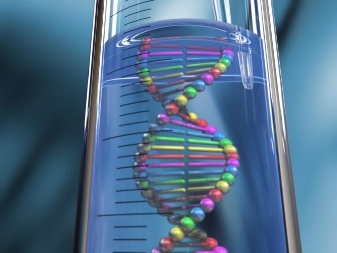 De nombreux gènes responsables de la taille ont été découverts