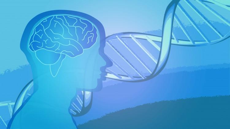 62% de la réussite scolaire serait d'origine génétique