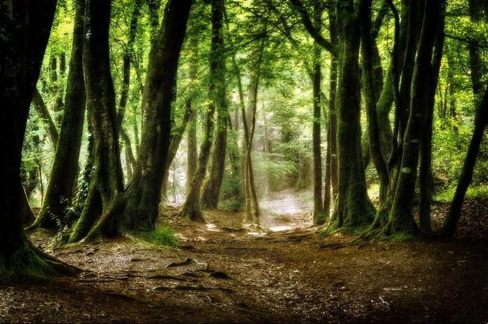 """""""L'amour et les forêts"""", roman dur qui a bouleversé les lycéens"""
