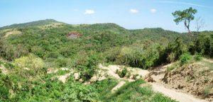 Honduras Jungle © virsuziglis - Fotolia