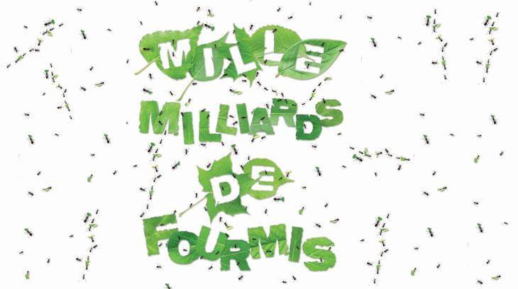 Les fourmis : une exposition pédagogique « vivante » à l'Espace des sciences de Rennes