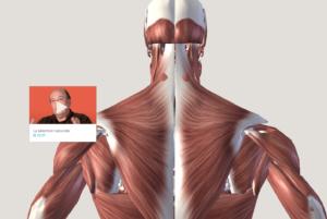 Les visualisations 3D du corps humain de la plateforme Corpus sont complétées par des vidéos réalisées par des experts.