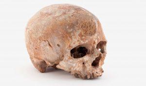 Crâne de Cro-Magnon dit le vieillard, Paléolithique supérieur, France © Muséum national d'histoire naturelle - JC Domenech