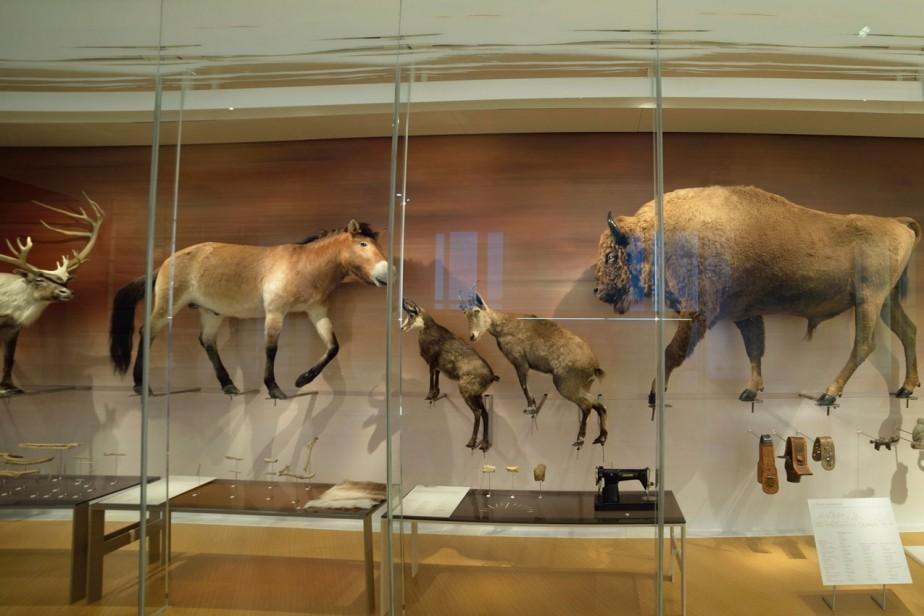 Galerie de l'Homme - D'où venons-nous ? © Muséum national d'histoire naturelle - Jean-Christophe Domenech