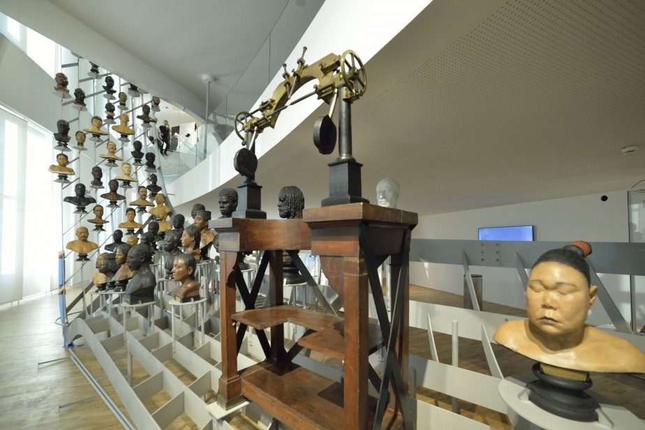«D'où venons-nous, où allons-nous ?» : le Musée de l'Homme rouvre ses portes