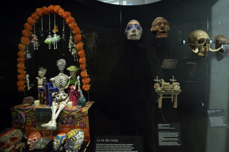 Galerie de l'Homme - Qui sommes-nous ? © Muséum national d'histoire naturelle - Jean-Christophe Domenech