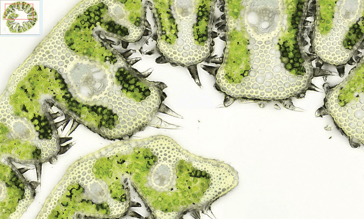 «Faire de la microscopie autrement» avec NIPIB en SVT