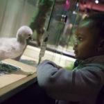 Bébés animaux : l'expo pédagogique et ludique des vacances