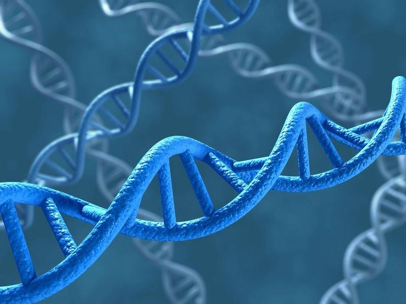 Les ciseaux génétiques : bienfaits et dérives