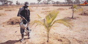 L'Esprit Sorcier présente notamment la ferme-école agro-écologique de Kaydara, qui forme à des pratique agricoles respectueuses de leur environnement.