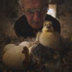Films animaliers en cycle 3 : «les enfants font  preuve d'une grande empathie envers les animaux»